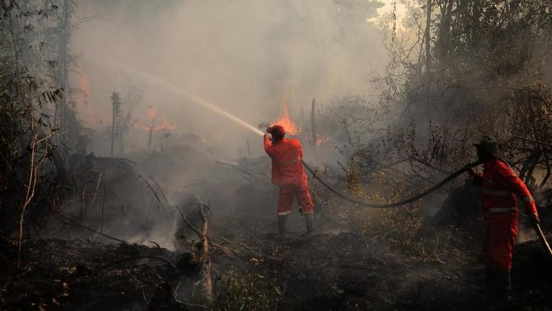 Petugas DLH Padamkan Kebakaran Lahan di Tahura Paser Kaltim