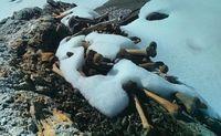 Teori Penyebab Ratusan Orang Tewas di Danau Terpencil Himalaya