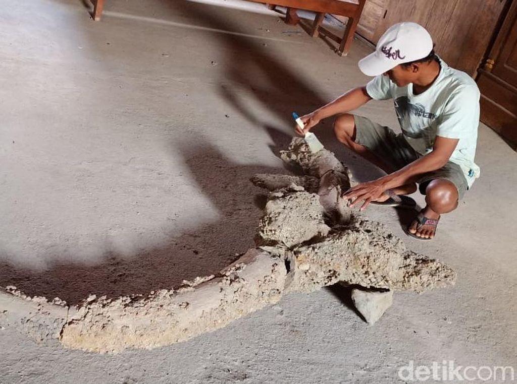 Warga Temukan Fosil Diduga Kepala Kerbau Raksasa di Grobogan