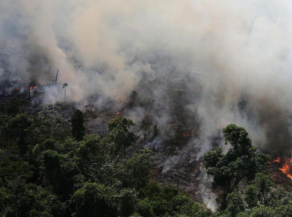 Hutan Amazon Alami Kebakaran Terburuk Tahun Ini