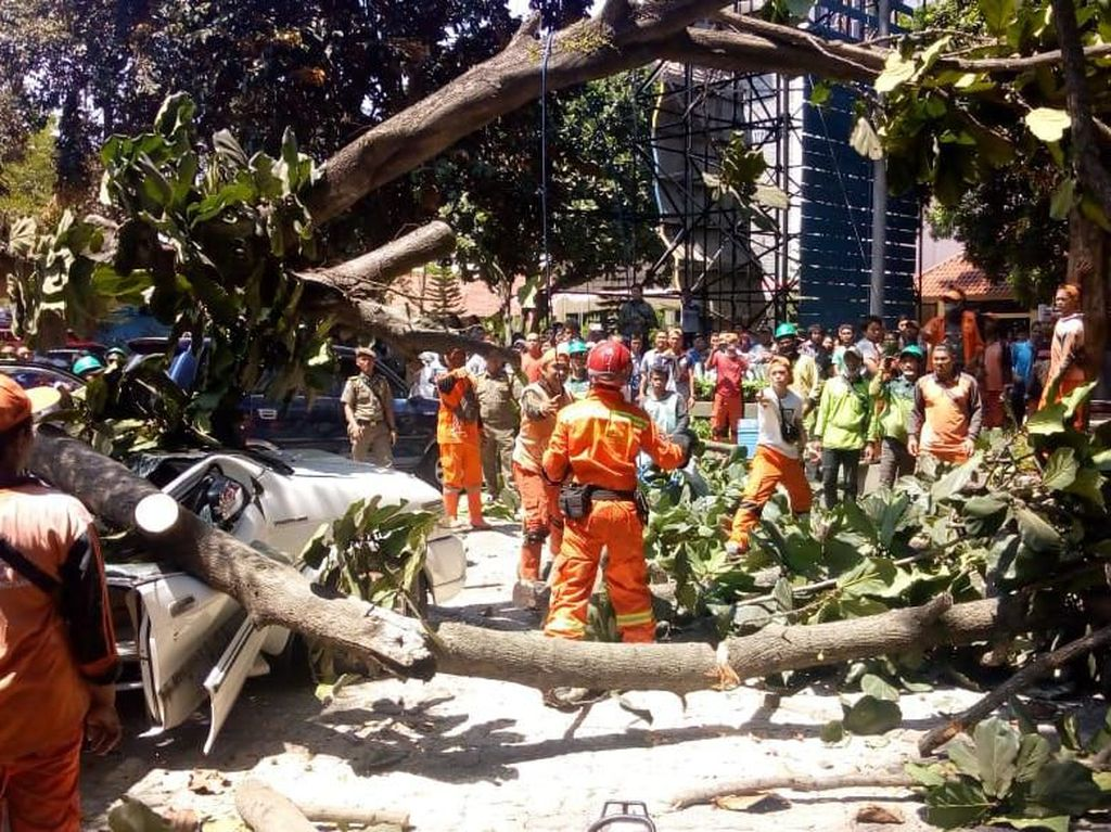 Penjelasan Pihak Universitas Pancasila soal Pohon Tumbang Timpa Mobil