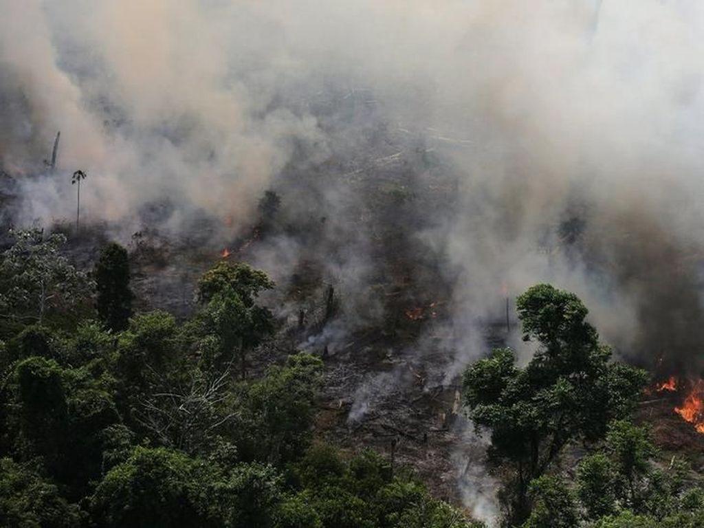 Memprihatinkan! Kebakaran Hutan Amazon Capai Rekor Tahun Ini