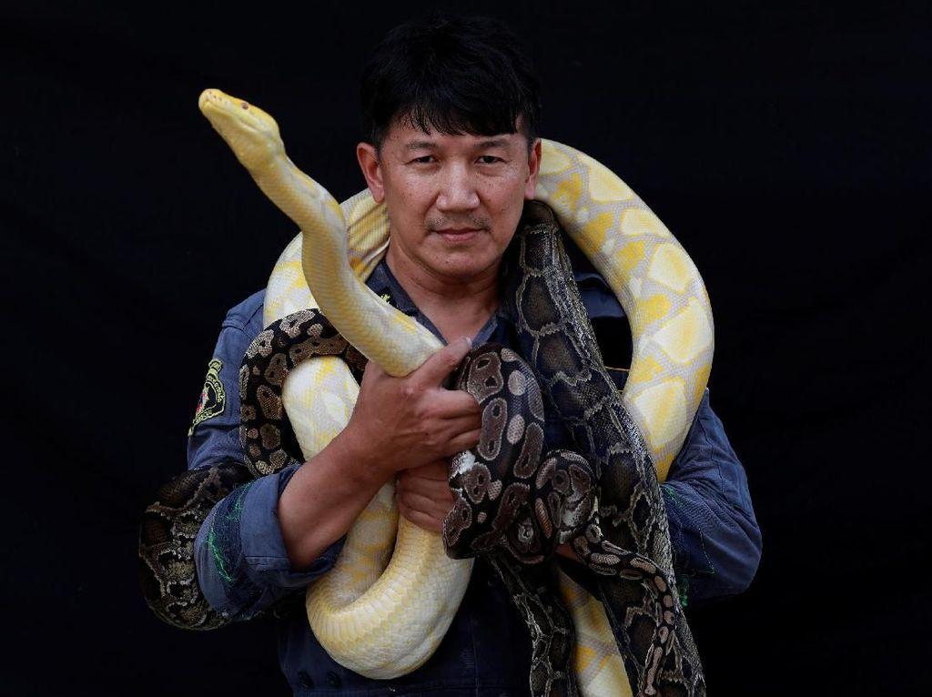 Mengintip Kehidupan Pemburu Ular dari Thailand