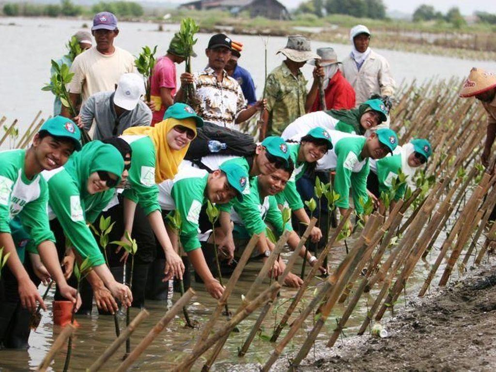Lestarikan Lingkungan, PHE ONWJ Tanam Bibit Mangrove di Karawang