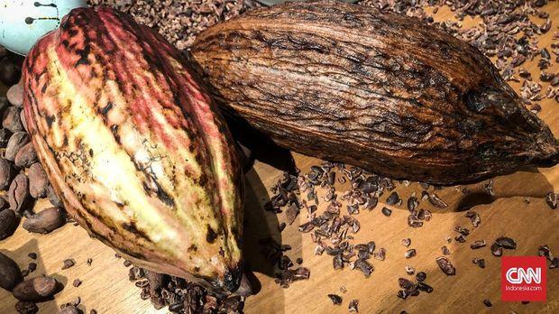 Cokelat Ransiki dari Pegunungan Arfak, Papua Barat yang diolah oleh Pipiltin Cocoa.