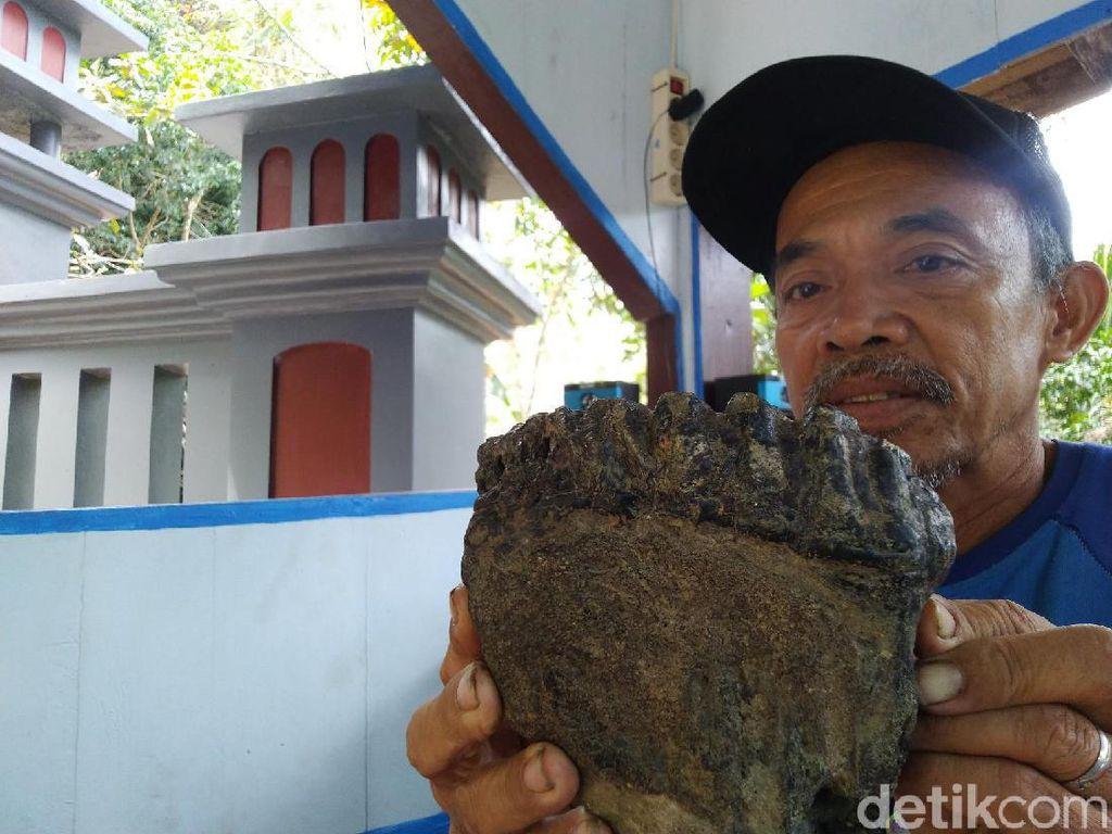 Rahang Gajah Purba Terkubur 1,5 Meter di Tanah Milik Unyil