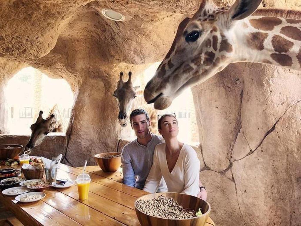 Hotel Ini Tawarkan Makan Bareng Jerapah, Antreannya 9 Ribu Orang!