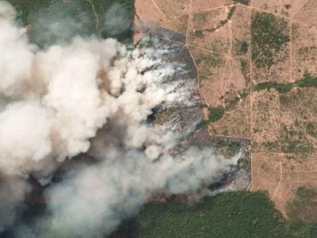 Hutan Tropis Amazon Terbakar Hebat, Seberapa Parah Keadaannya?