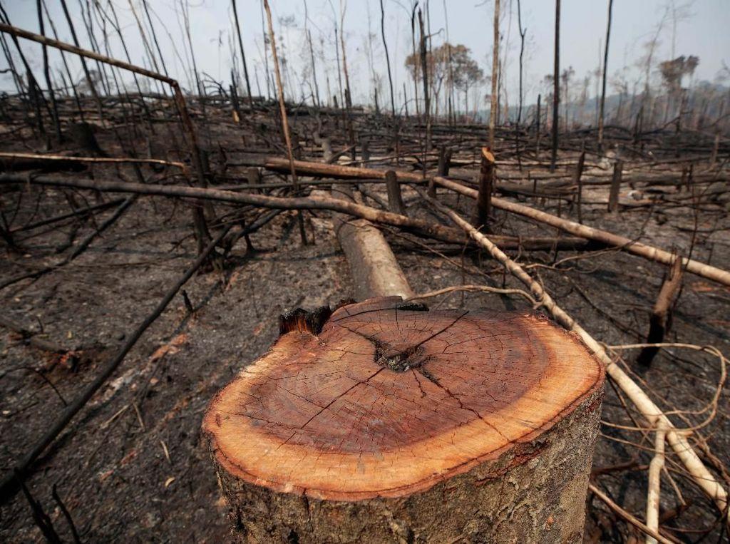 Dugaan di Balik Kebakaran Hutan Amazon
