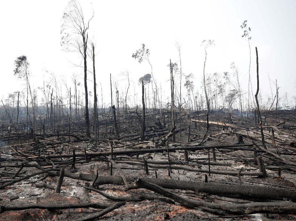Melihat dari Langit, Kerusakan Amazon Akibat Kebakaran Hutan