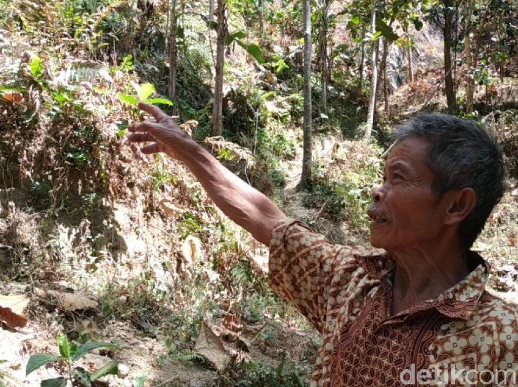 Jejak Harimau Teror Warga Pacitan, Begini Kesaksiannya