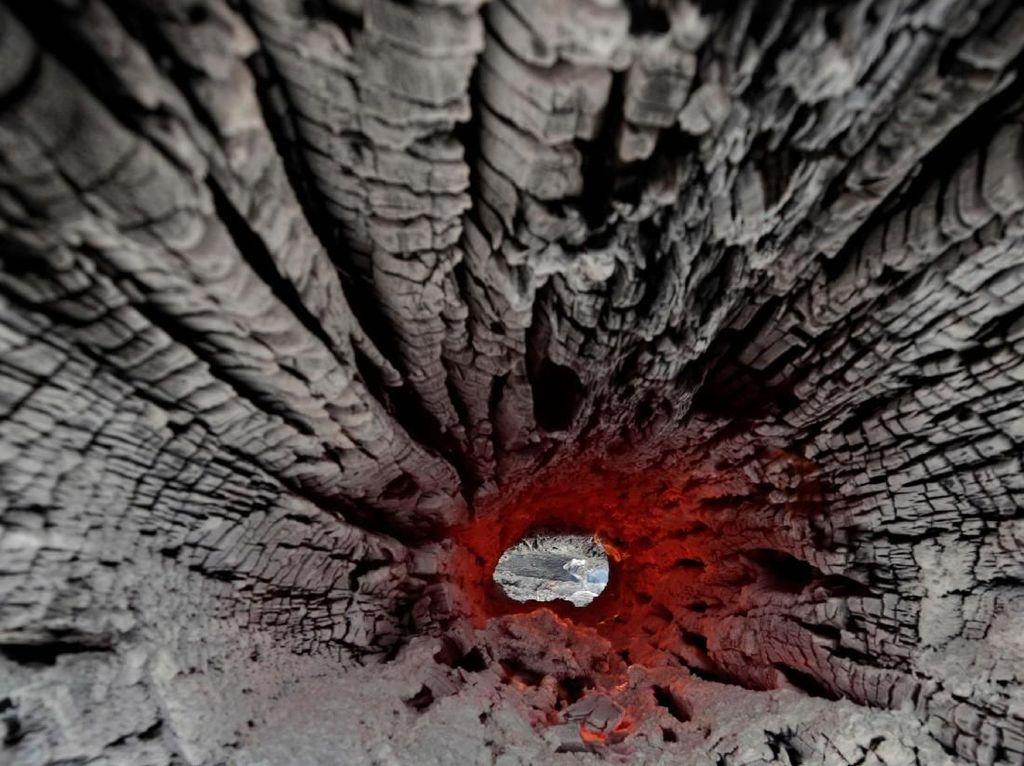 Hutan Amazon Membara dan Merana