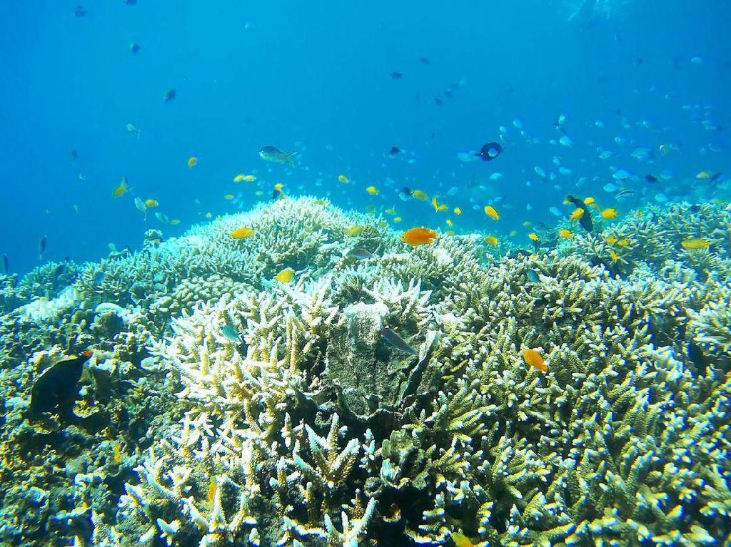 Pulihkan Wisata Bahari, Buleleng Jadi Lokasi Restorasi Terumbu Karang