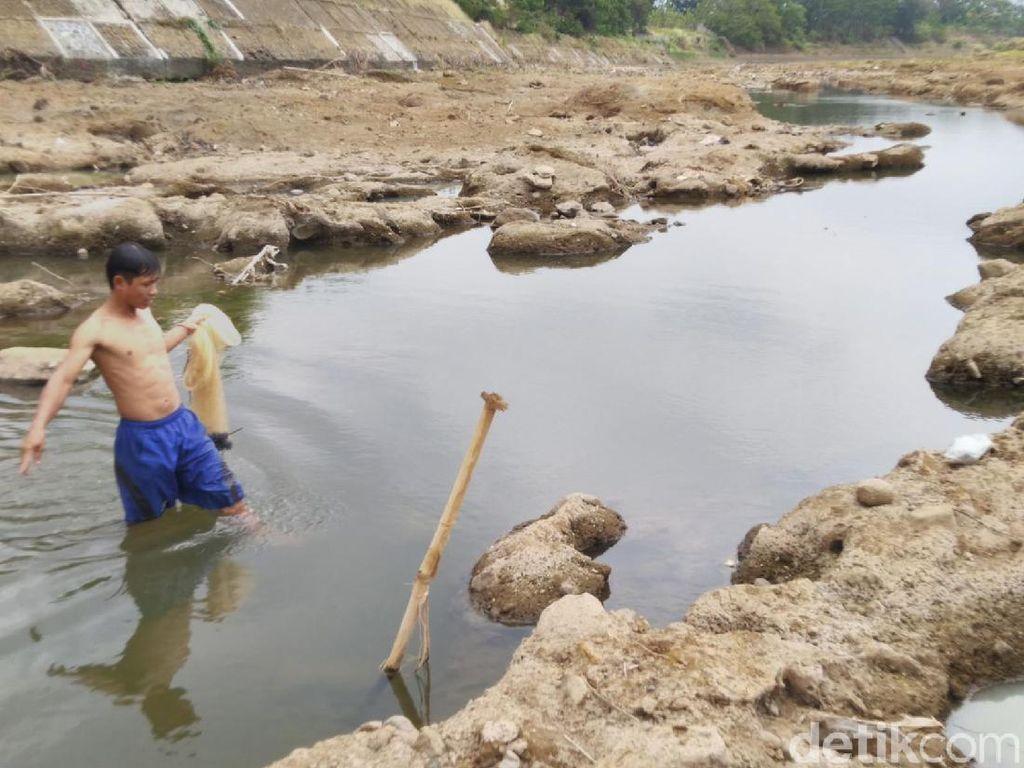 Bermain di Dasar Sungai Citanduy Banjar yang Mengering Saat Kemarau