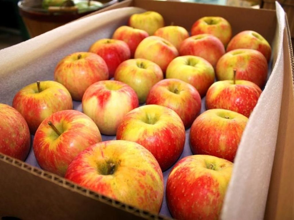 7 Makanan untuk Menyehatkan Paru-paru dan Saluran Pernafasan