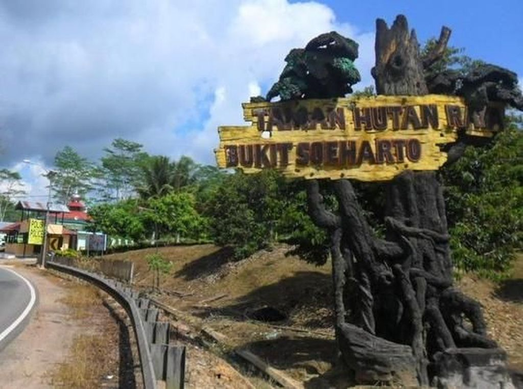 Bukit Soeharto Tetap Hutan Konservasi Meski Ada Ibu Kota