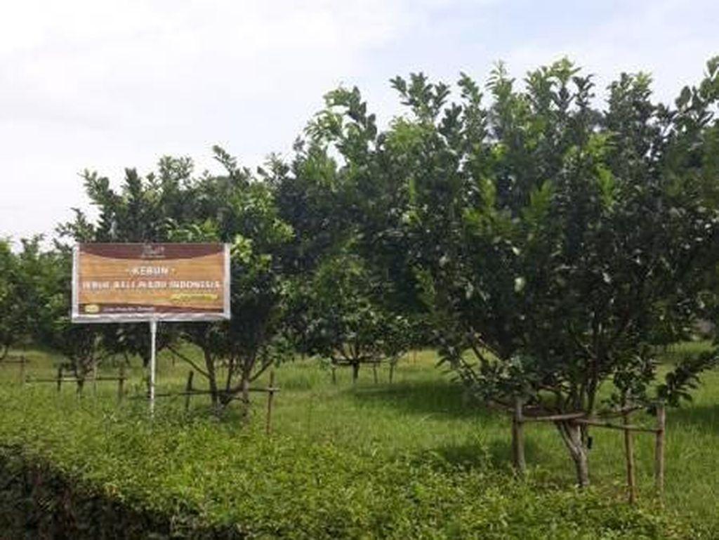 Agrowisata di Bawen, Ini Tempatnya