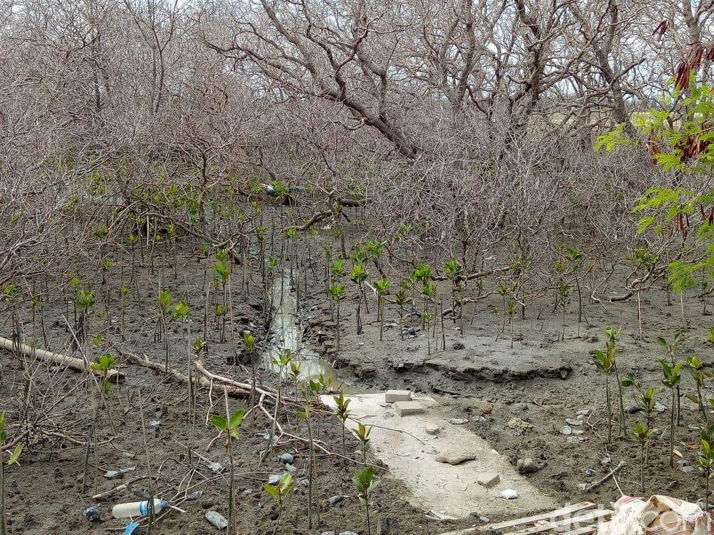 PK Kandas, Eks Anggota DPRD Badung Dibui karena Tebangi Pohon di Tanjung Benoa