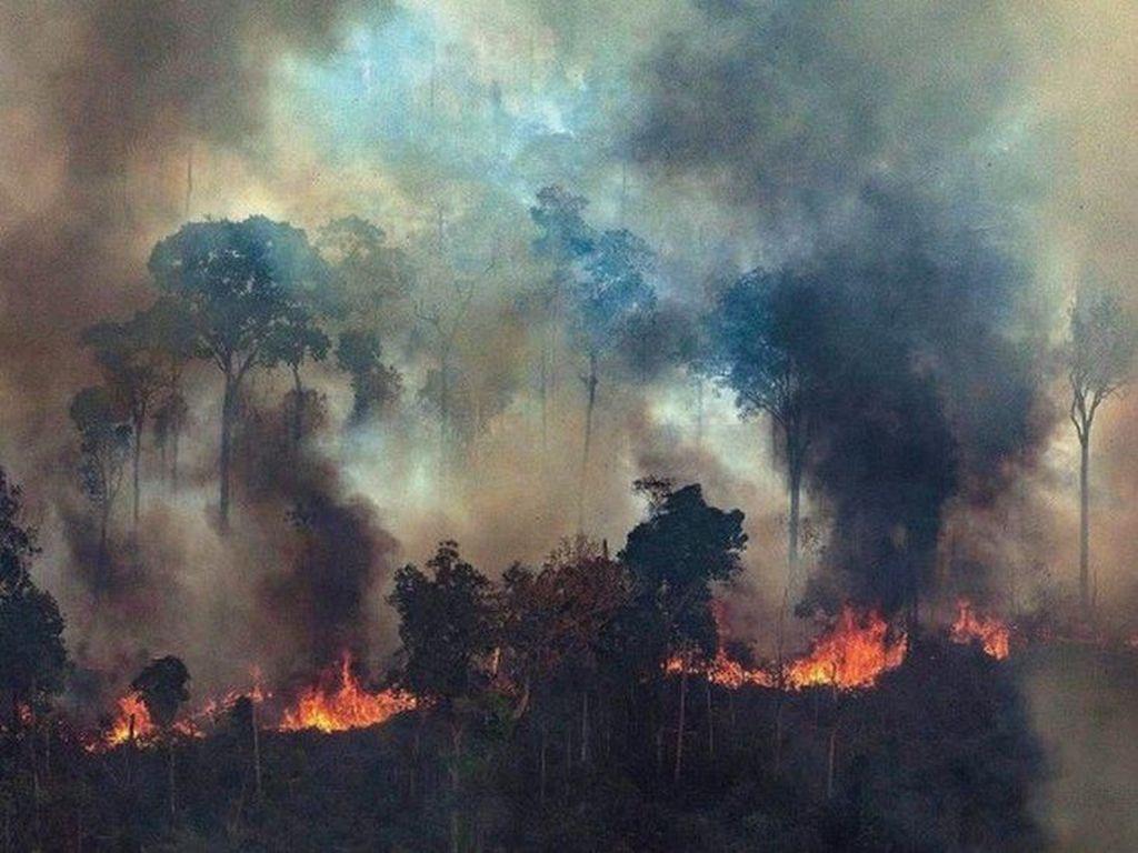 Hutan Amazon Terbakar, Dilarang Bakar-bakar di Brasil Selama 2 Bulan