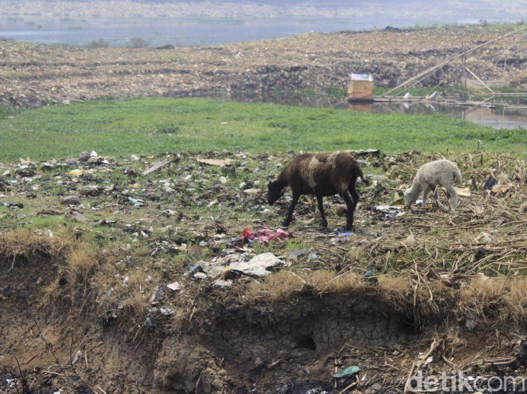 Melihat Kemunculan Pulau Sampah Saat Sungai Citarum Mengering