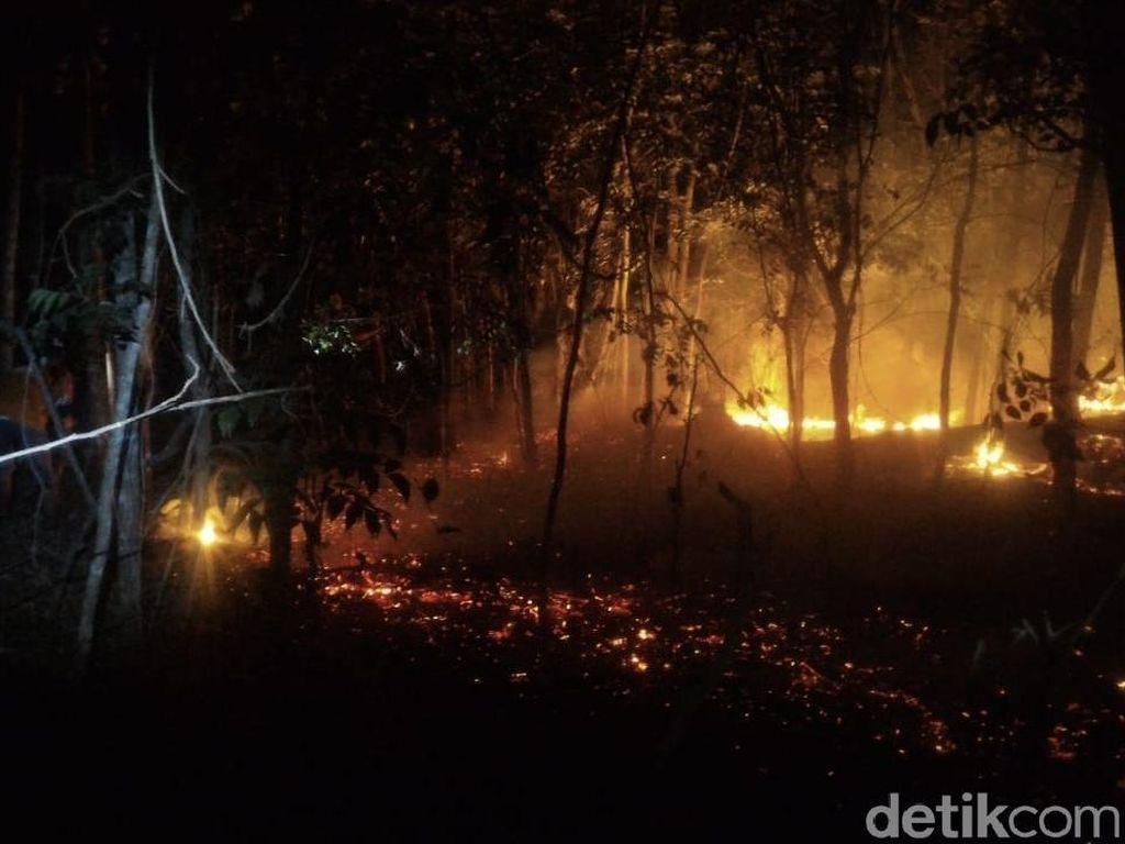 BPBD: 10 Hektare Lahan Perhutani di Alas Kethu Wonogiri Terbakar