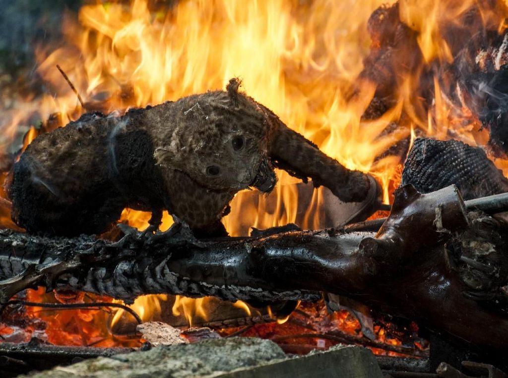Ratusan Satwa Awetan Dimusnahkan di Kebun Binatang Bandung