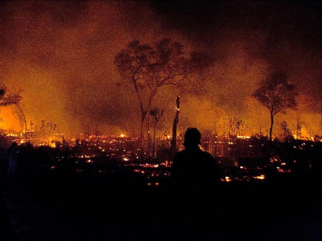 Peneliti Harvard Pantau Kebakaran Hutan Amazon Pakai Drone