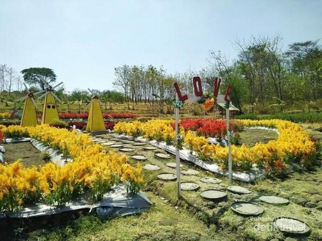Sangiran Punya Kebun Bunga Secantik Ini