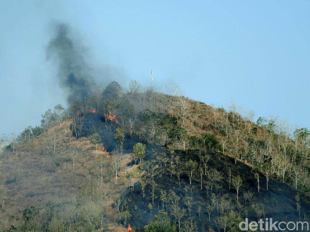 Gunung Kebo Trenggalek Terbakar, 1,5 Hektare Lahan Hangus