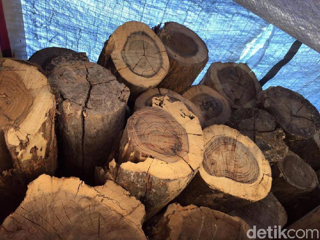 Polisi Wonogiri Buru Pasutri Diduga Terlibat Illegal Logging