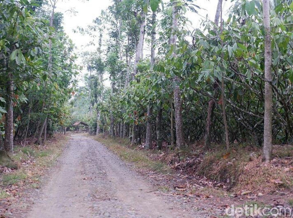 Kepala Dusun Wonorejo Tolak Desanya Dikaitkan Kisah KKN Desa Penari