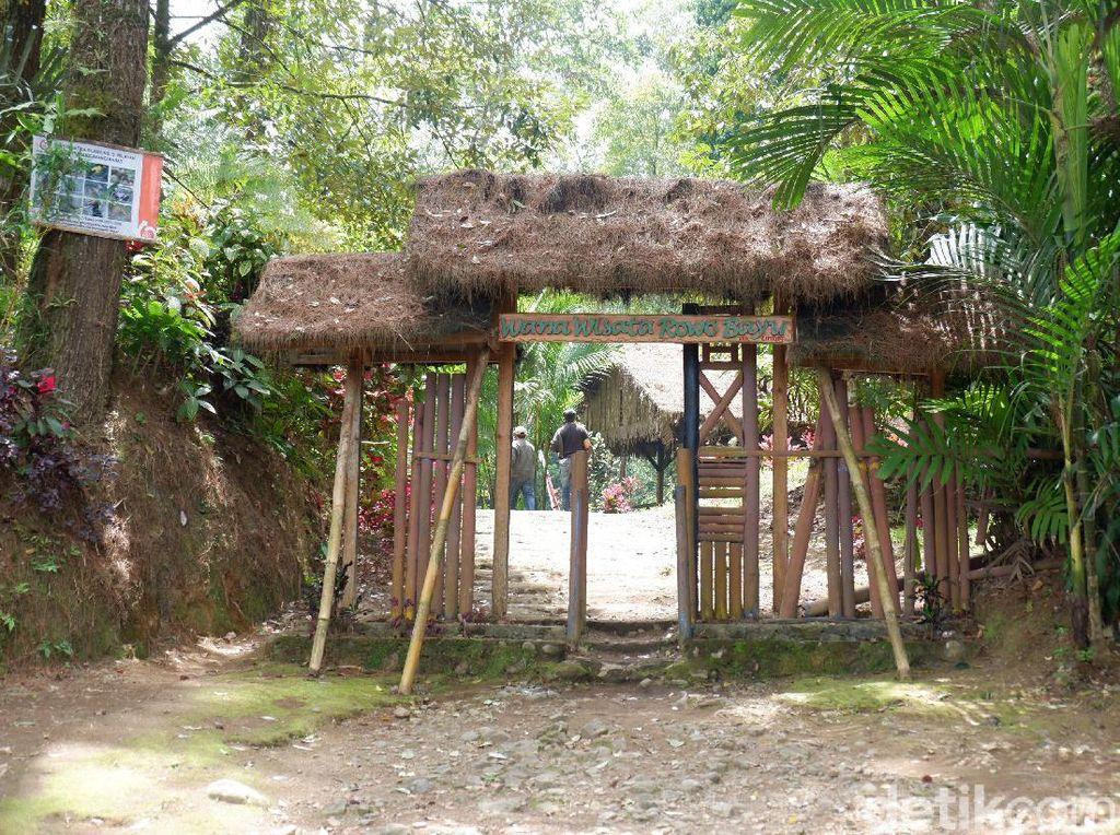 Rowo Bayu, Destinasi Wisata yang Katanya Mirip Desa Penari