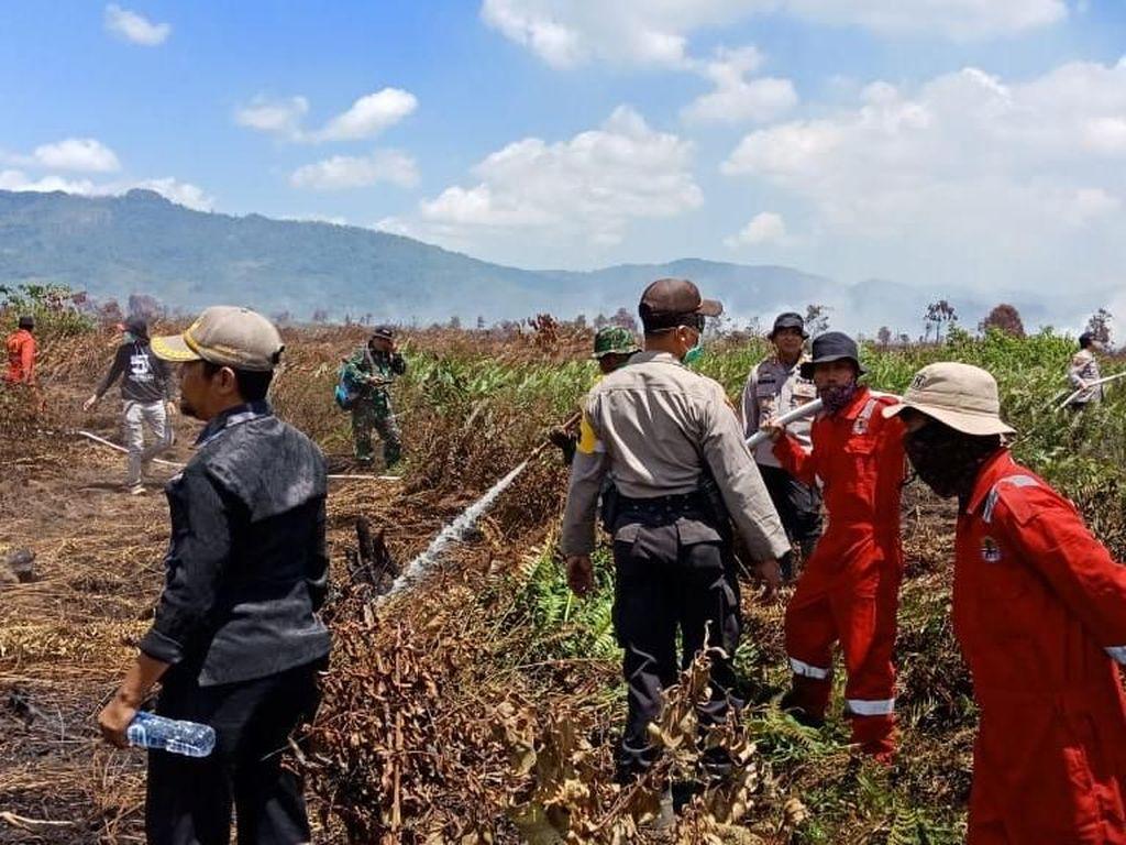 Lahan Seluas 150 Hektare Terbakar di Kolaka Timur Sultra