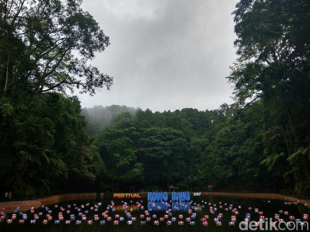 Rowo Bayu, Desa Penari dan Festival Hari Jadi Banyuwangi