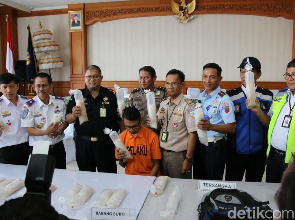 Petugas Bandara Ngurah Rai Penyelundup Baby Lobster Rp 2,6 M Diamankan