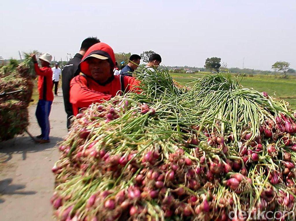 Biar Harga Nggak Anjlok, Petani Minta Bulog Beli Bawang Merah