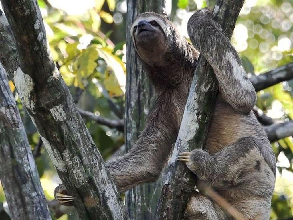 Kebakaran Hutan Amazon, Bagaimana Nasib Binatang yang Terperangkap?