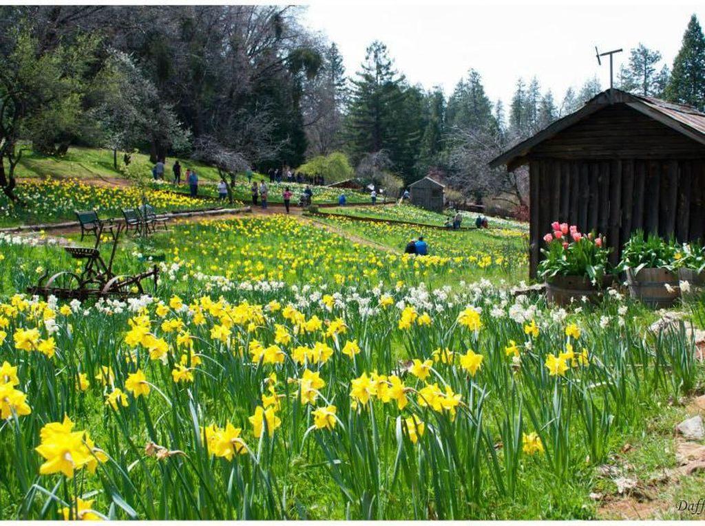 Terlalu Instagramable, Taman Bunga Ini Ditutup