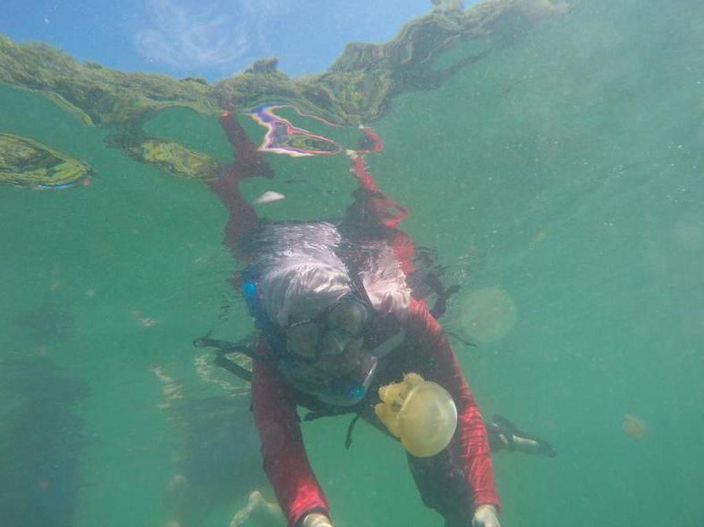 Harus Coba Berenang dengan Ubur-ubur di Kaltim!