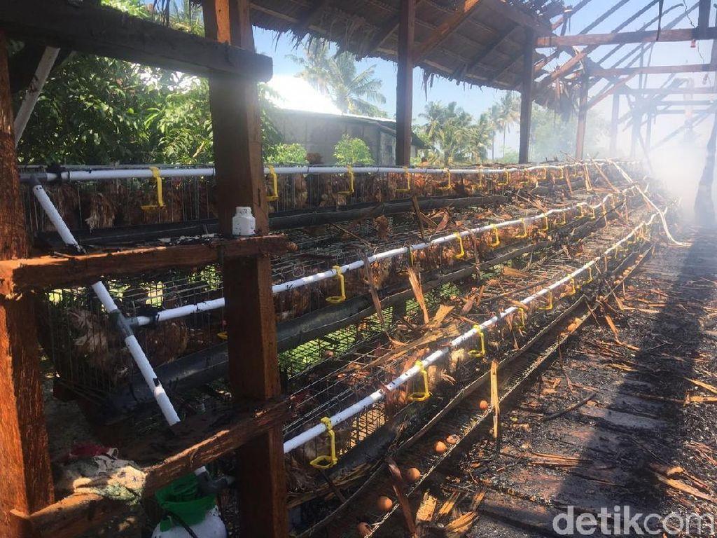 Kebakaran Landa Rumah di Polman Sulbar, Ratusan Ayam Mati Terpanggang