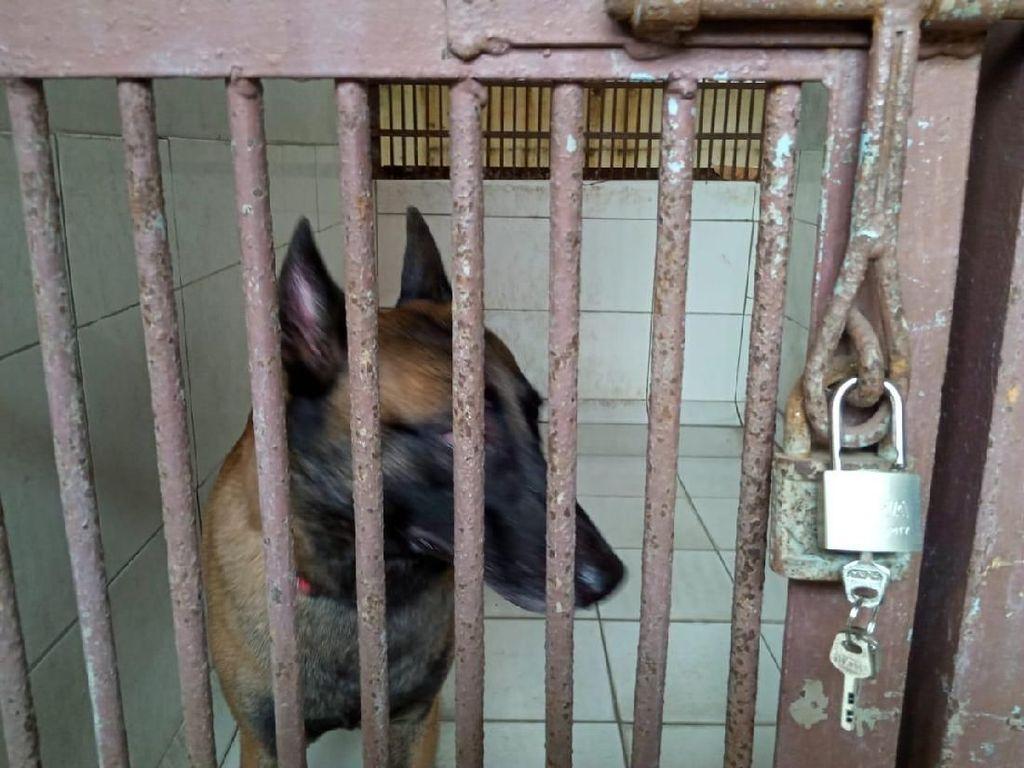 Diobservasi, Begini Kondisi Anjing Milik Bima Aryo yang Tewaskan ART