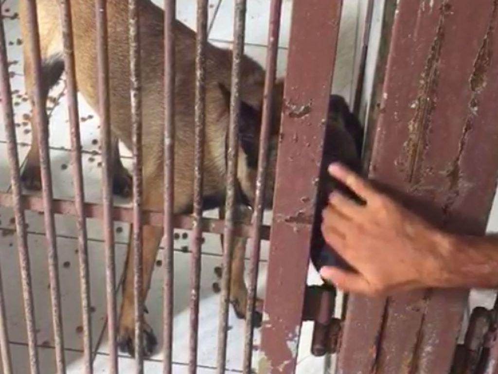 Sudah Divaksin Rabies, Anjing Bima Aryo Tetap Jalani Observasi