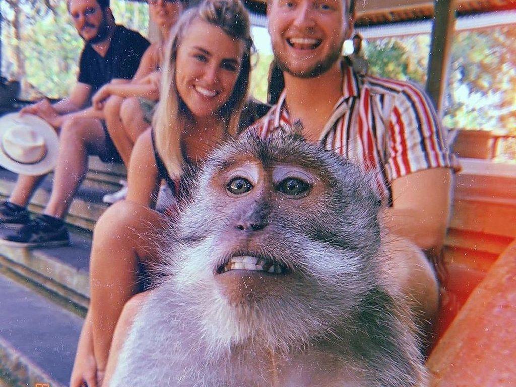 Viral Rahasia Selfie dengan Monyet di Bali