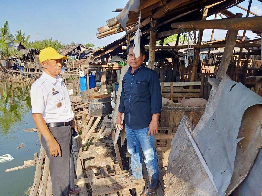 Pemkot Makassar Larang Peternakan Babi di Jalan Haji Kalla