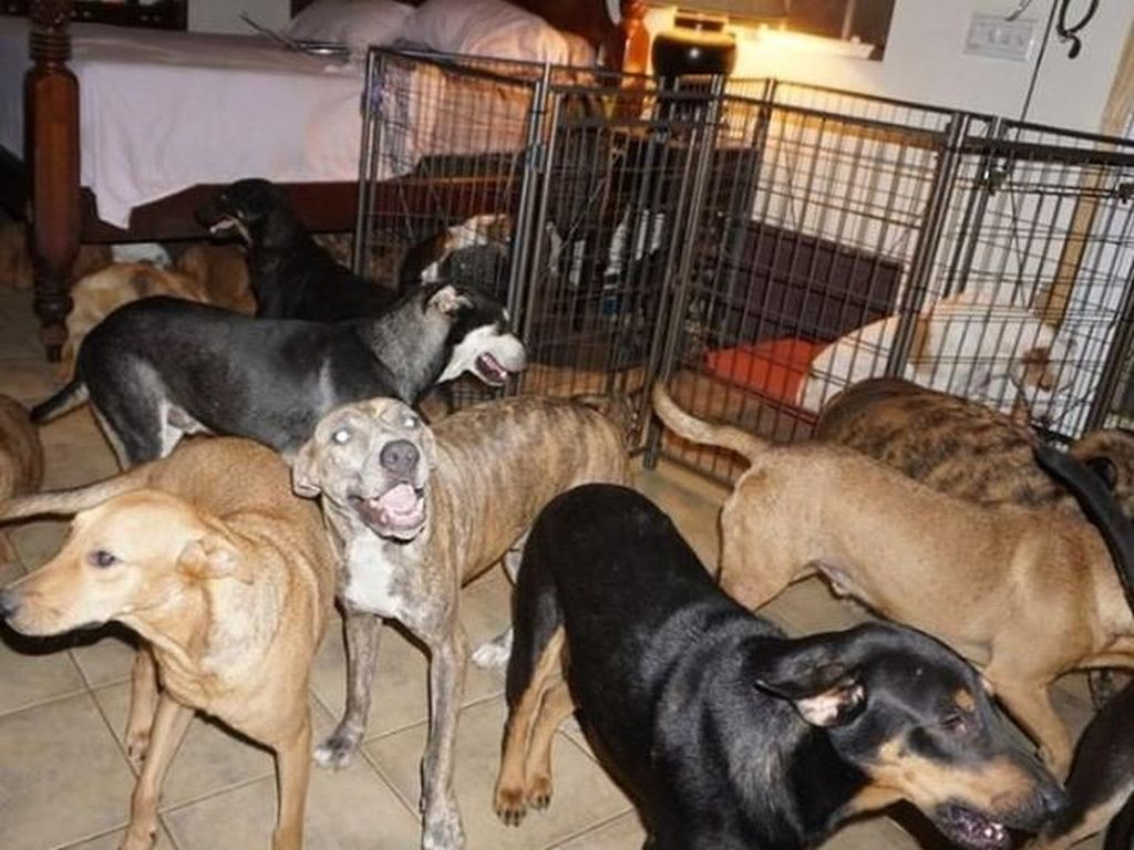 Diterjang Topan Dorian, Perempuan Ini Tampung Nyaris 100 Anjing di Rumahnya