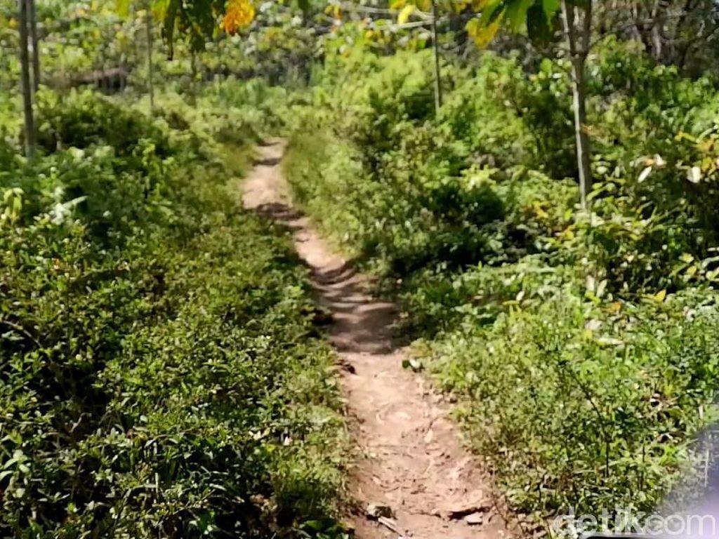 Aroma Mistis Menelusuri Kampung yang Diduga Lokasi KKN Desa Penari