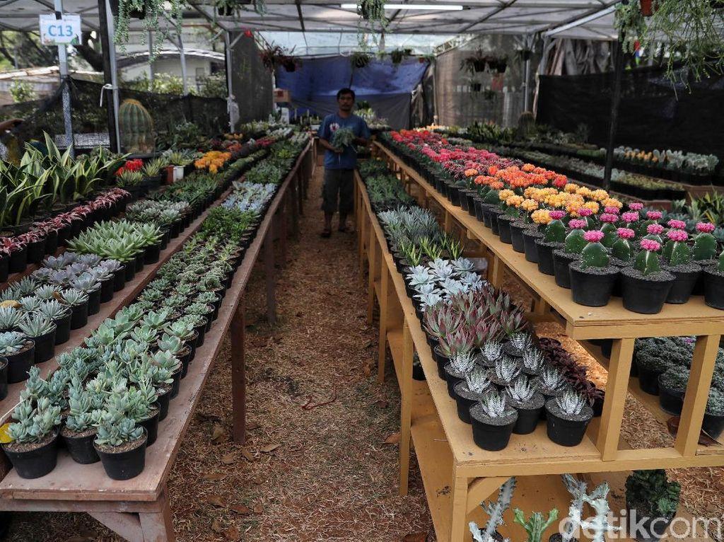 Intip Persiapan Pameran Flora Fauna 2019 di Lapangan Banteng