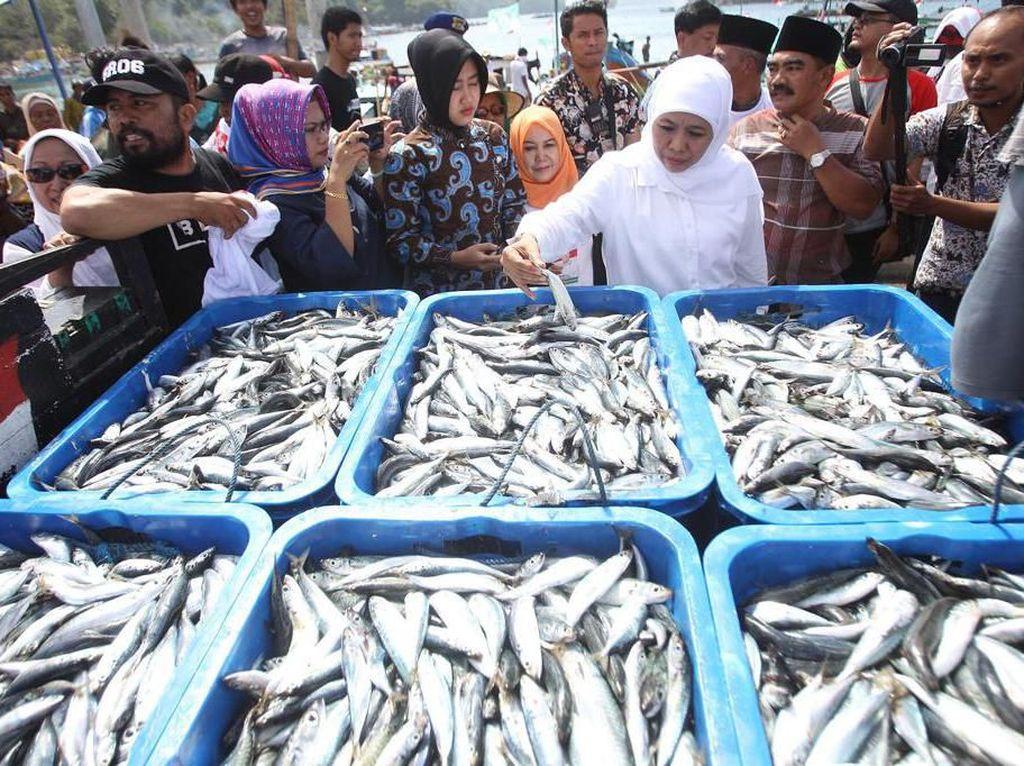 Pemprov Jatim Segera Adopsi Teknologi Deteksi Ikan Untuk Nelayan