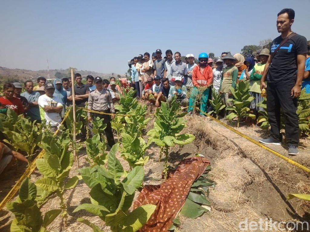 Mayat Luka di Kepala Ditemukan di Ladang Tembakau di Rembang
