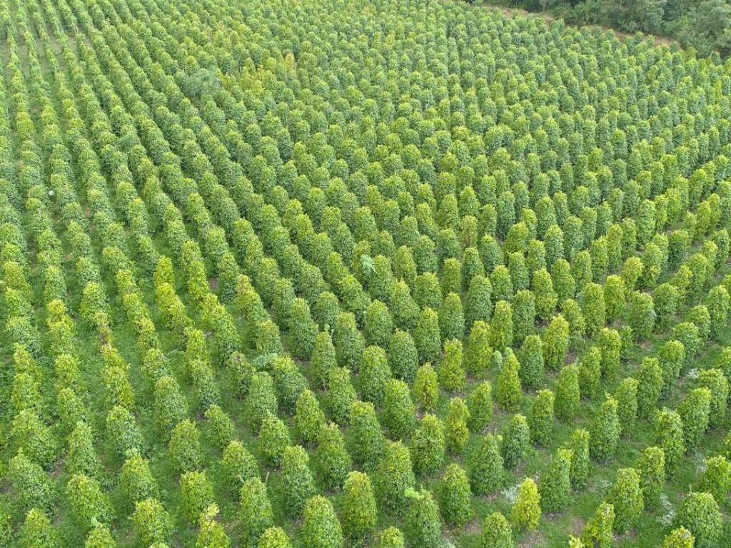 Kementan Sebut Ekspor Perkebunan & Peternakan Tumbuh di Atas 4%